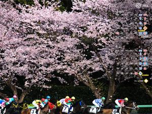 Jra20113_800x600